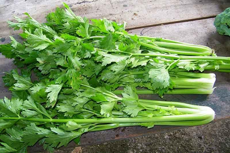 Để bổ sung chất sơ, bệnh nhân cần ăn nhiều rau cần tây