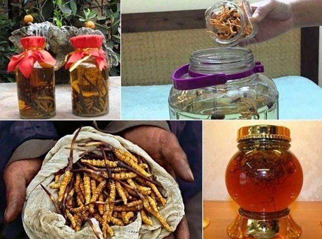 5 cách ngâm rượu đông trùng hạ thảo đơn giản tại nhà