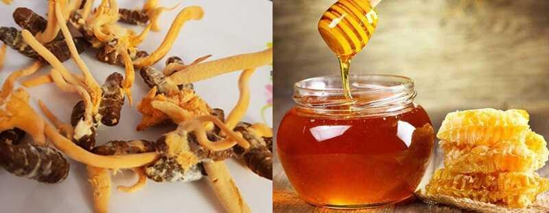 Dùng đông trùng hạ thảo ngâm mật ong giúp bảo vệ sức khỏe hàng ngày