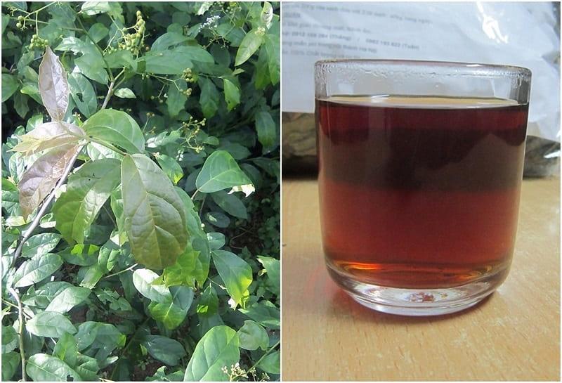 Nước sắc từ xạ đen mang lại nhiều công dụng