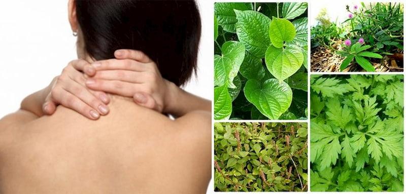 Các loại thảo dược kết hợp với lá lốt hỗ trợ điều trị hiệu quả