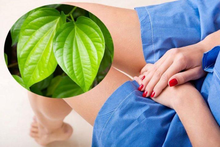 Xông hơi vùng kín bằng lá trầu không để chữa viêm âm đạo