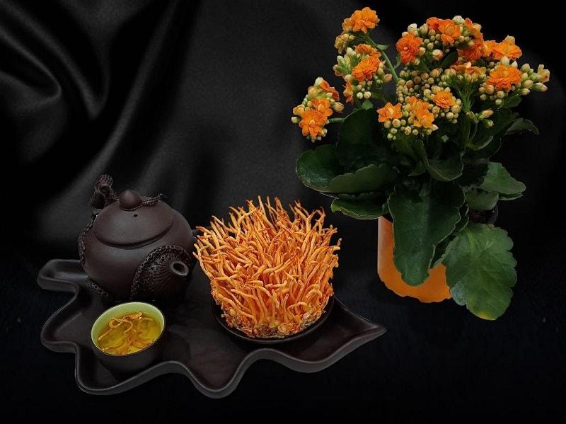 Đông trùng hạ thảo Đài Loan là tên gọi chung của các loại nấm dược liệu có xuất xứ từ Đài Loan