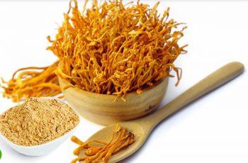 Bột đông trùng hạ thảo là một trong các dòng sản phẩm đông trùng được nhiều người sử dụng
