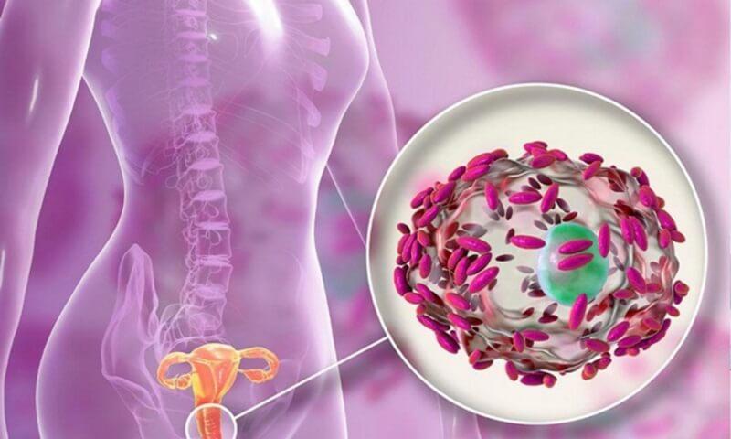 Vi khuẩn phát triển làm mất cân bằng hệ sinh thái âm đạo