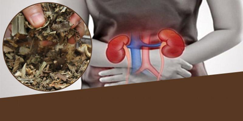 Chữa sỏi bàng quang bằng thuốc Đông y mang tính an toàn, không gây tác dụng phụ