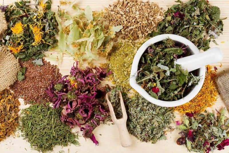 Một số vị thuốc Đông y làm tan sỏi trong cơ thể