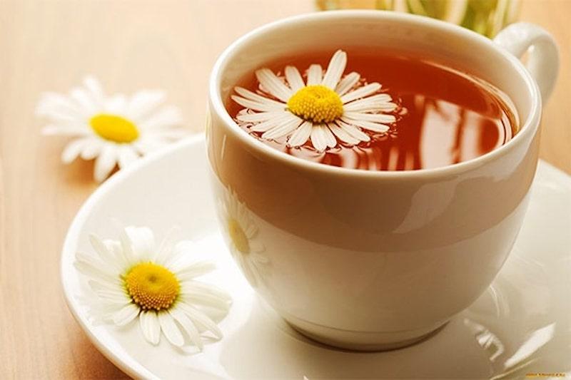 Trà hoa cúc giảm axit dạ dày