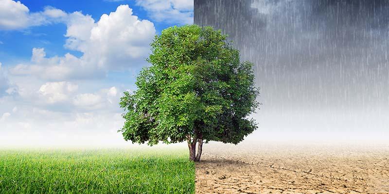Thay đổi thời tiết có thể là nguyên nhân khiến trẻ dễ bị dị ứng da đầu