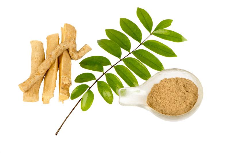 Rễ cây bá bệnh khô được bào chế dạng bột