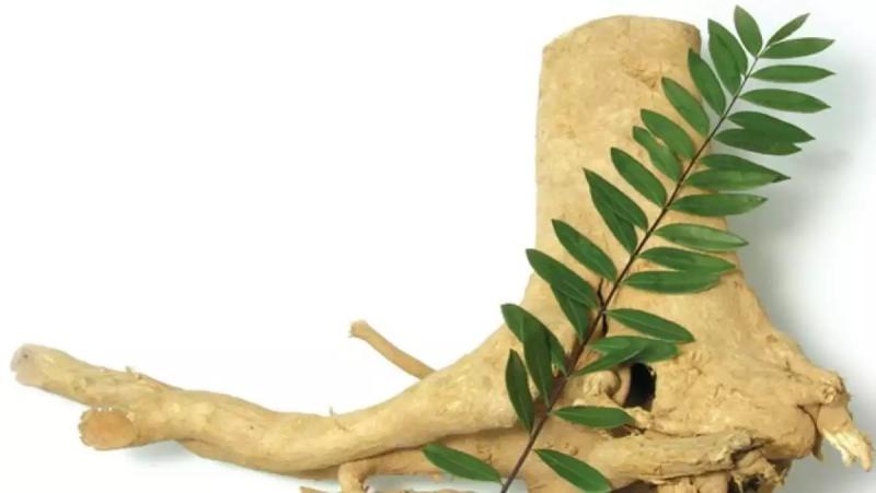 Sử dụng cây bá bệnh không đúng cách sẽ gây ảnh hưởng đến sức khỏe