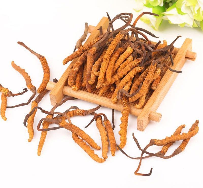 Trong đông trùng hạ thảo chứa nhiều thành phần dinh dưỡng tuyệt vời