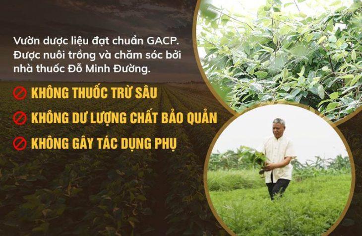 Vườn dược liệu sạch dòng họ Đỗ Minh