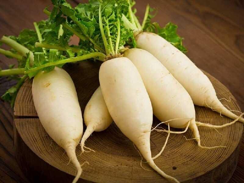 Củ cải trắng theo đông y có tính mát chống đờm hiệu quả