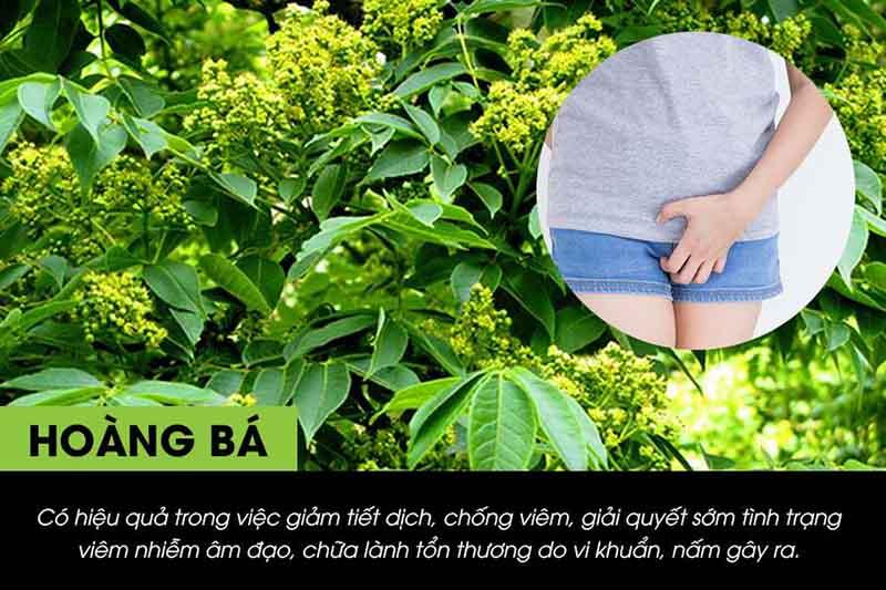 Hoàng Bá là một trong những dược liệu dùng để chữa bệnh