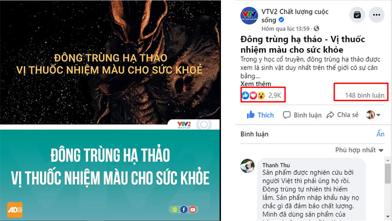 VTV2 đưa tin đông trùng hạ thảo Vietfarm là sản phẩm chất lượng của người Việt