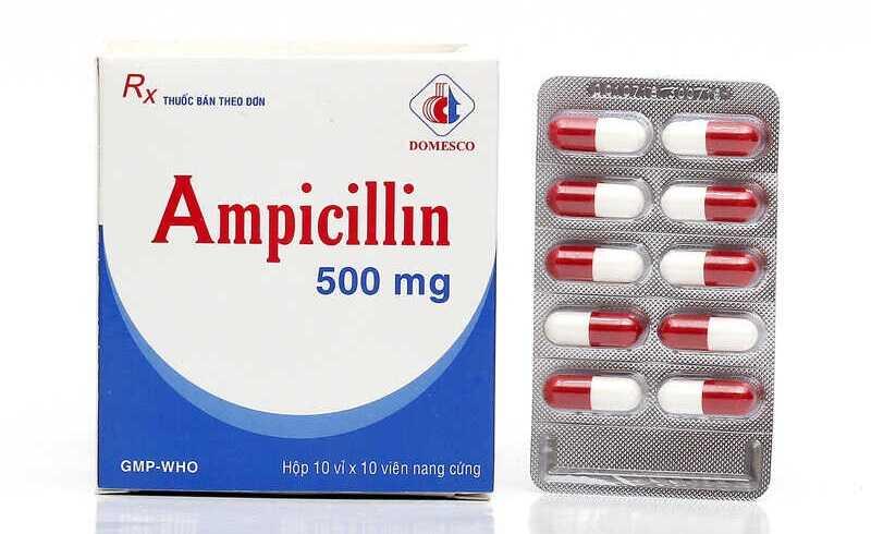 Thuốc kháng sinh Ampicillin có khả năng điều trị ho gà hiệu quả