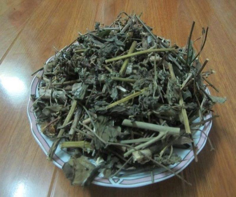 Bạch đồng nữ có thể dùng phần rễ và lá để làm dược liệu
