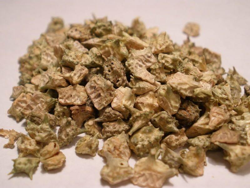 Thảo dược được thu hoạch phần quả, phơi khô để sử dụng lâu dài