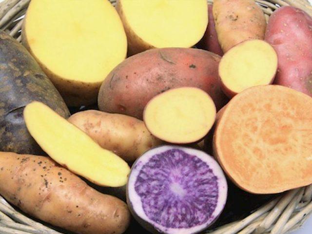 Bị trào ngược dạ dày có nên ăn khoai lang? - Người bệnh nên ăn thường xuyên giúp giảm trào ngược acid dịch vị rất tốt