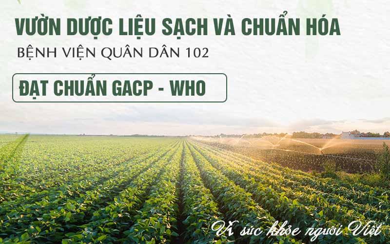 Bệnh viện Tai Mũi Họng Quân dân 102 phát triển các vườn dược liệu sạch