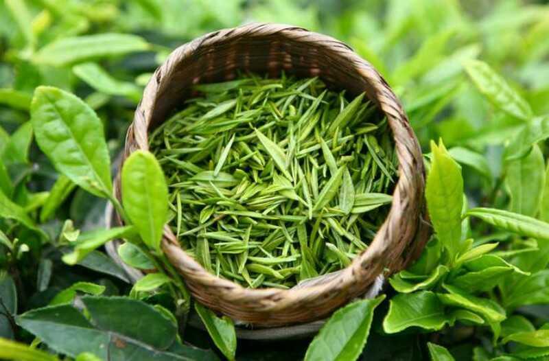 Trà xanh chứa nhiều khoáng chất và vitamin có tác dụng kháng khuẩn, kháng viêm rất hiệu quả