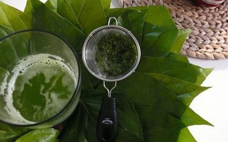 Lá lốt là loại cây phổ biến ở nhiều làng quê Việt Nam