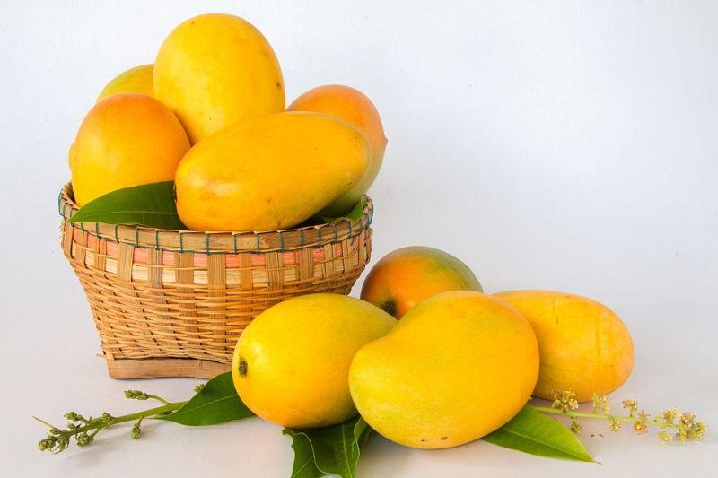 Xoài có chứa nhiều đường D-mannose tốt cho người bị viêm đường tiết niệu