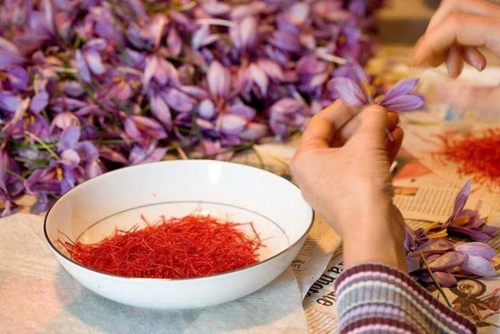 Hộp 1g nhụy hoa nghệ tây dùng được bao lâu thì hết?