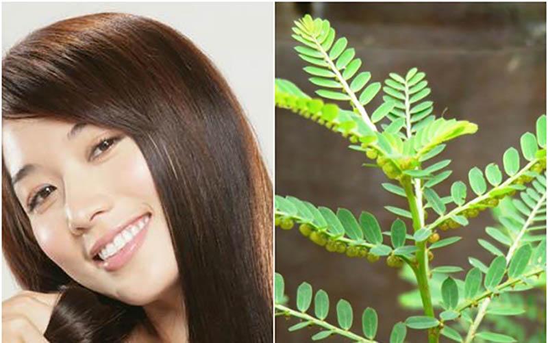 Cây chỏ đẻ ngoài tác dụng giải độc, lợi tiểu còn rất tốt khi dùng để chữa nấm da đầu