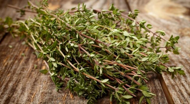 Chiết xuất từ cây Thyme có thể giảm nahnh các triệu chứng ho, khàn cổ