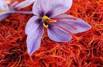 Top 3 sản phẩm nhụy hoa nghệ tây của Mỹ bán chạy nhất thị trường