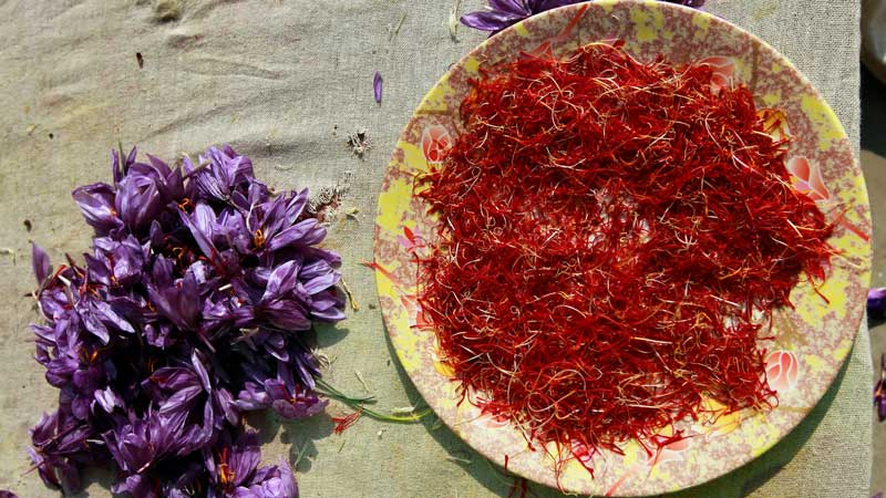 Theo review nhụy hoa nghệ tây, cách phân loại saffron phụ thuộc vào nguồn gốc, độ dài nhụy và phương thức canh tác