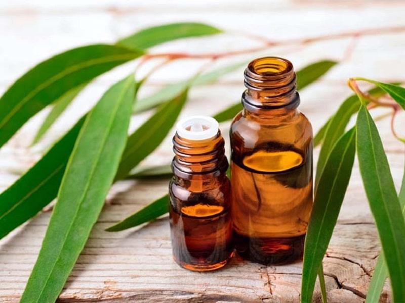 Tinh dầu khuynh diệp có điều trị rất tốt được nhiều người áp dụng
