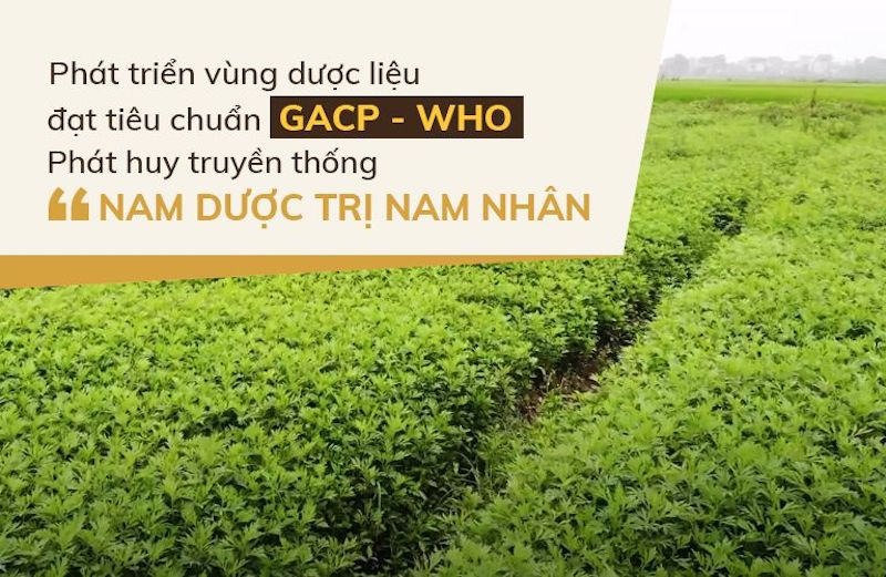 Vườn dược liệu Đỗ Minh Đường ở các tỉnh Hòa Bình, Hưng Yên và Hà Nội