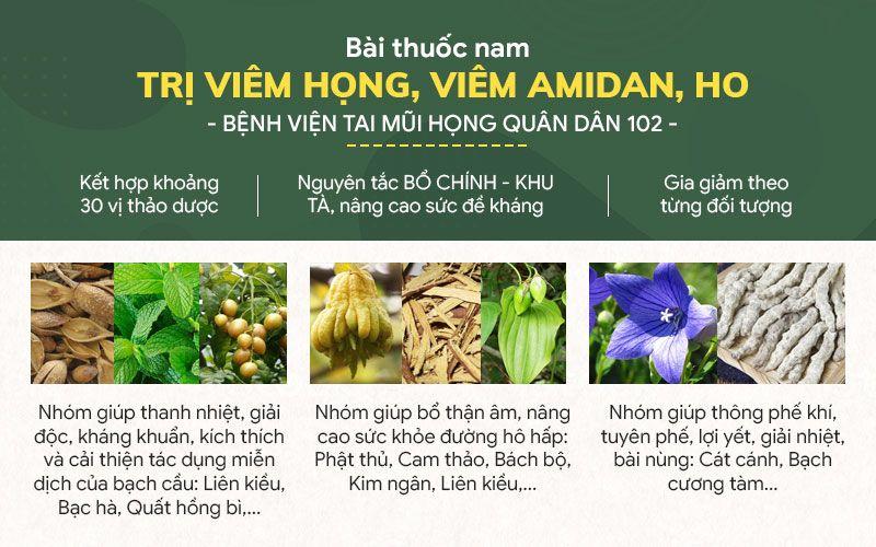 Những nhóm thuốc chính trong Thanh Hầu Bổ Phế Thang
