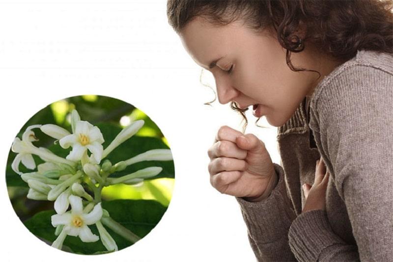 Theo góc nhìn của Đông y hay Tây y, hoa đủ đều có tác dụng trị bệnh ho