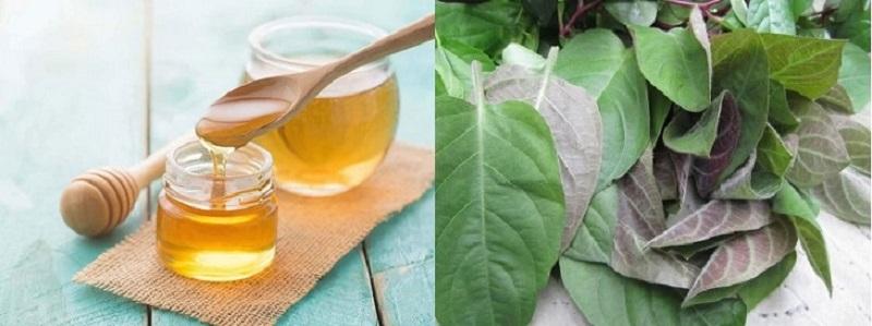 Chữa ho bằng lá mơ lông và mật ong nên uống vào buổi sáng sớm và buổi tối trước khi đi ngủ
