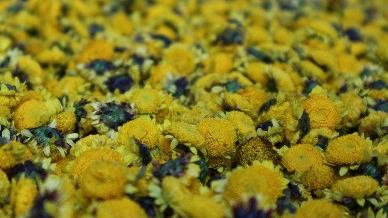 Tìm hiểu về cúc hoa