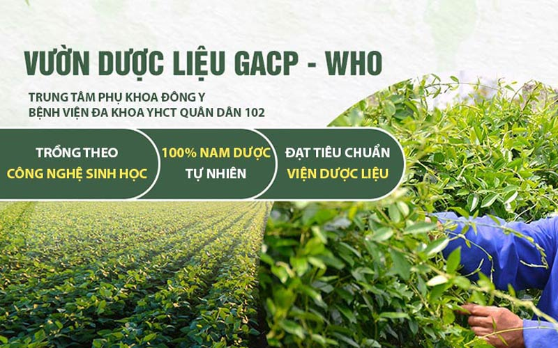 Thảo dược đạt chuẩn GACP-WHO