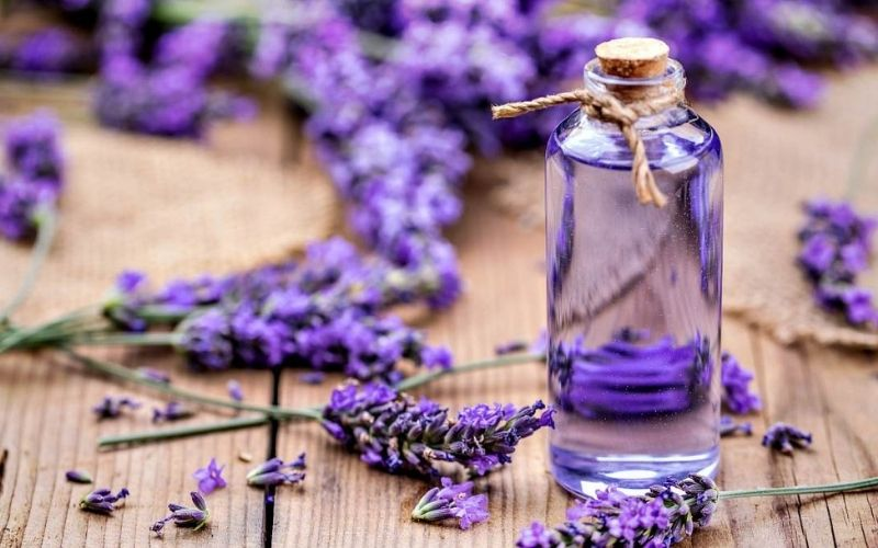 Sử dung tinh dầu oải hương kích thích sự hình thành collagen