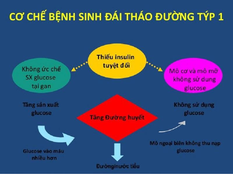 Việc thiếu hụt hormone Insulin trong cơ thể là nguyên nhân gây ra bệnh tiểu đường tuýp 1