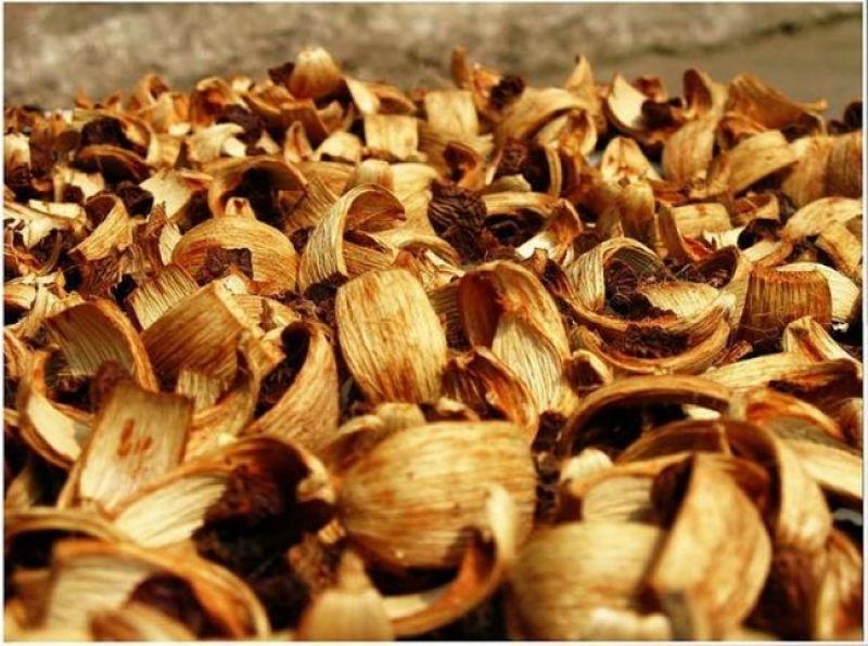 Vỏ cau khô là dược liệu có mặt trong nhiều bài thuốc Đông y