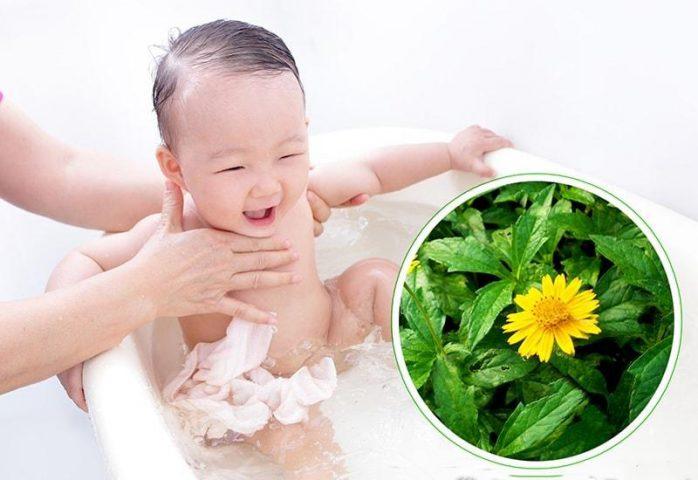 Bạn có thể dùng nước sài đất tắm cho bé để trị chàm sữa