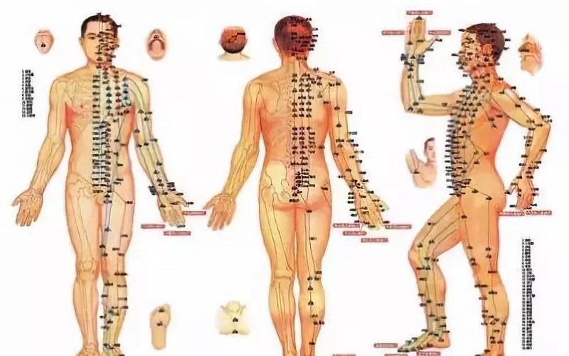 Đường kinh lạc trong cơ thể người