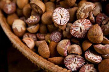 Có thể dùng hạt cau khô ngâm rượu để trị bệnh sâu răng tại nhà