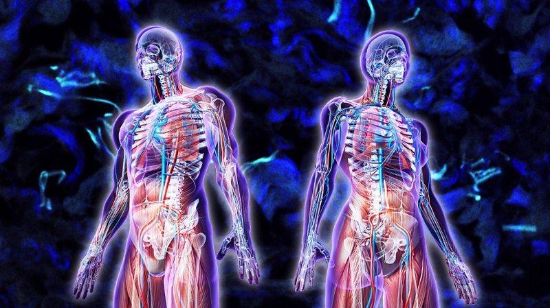 Để lục phủ ngũ tạng luôn khỏe mạnh bạn cần có lối sống khoa học, lành mạnh