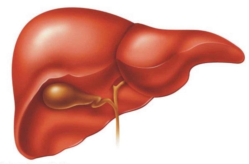 Can được hiểu là gan, một bộ phận quan trọng trong cơ thể con người