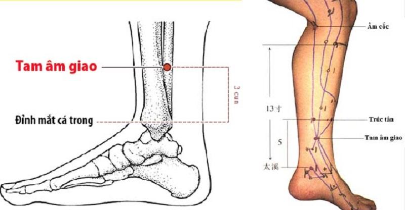 Huyệt tam âm giao là một huyệt đạo quan trọng và phổ biến với phương pháp châm cứu
