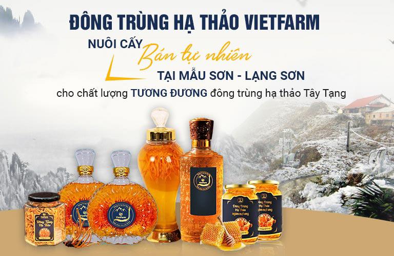 Đông trùng hạ thảo Vietfarm được sinh trưởng tự nhiên tại đỉnh núi Mẫu Sơn - Lạng Sơn